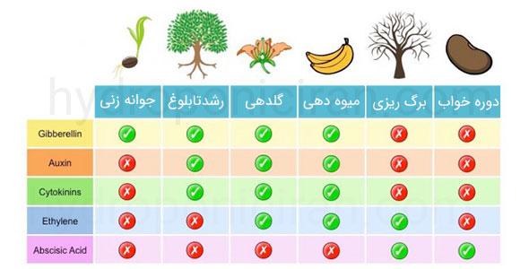 هورمونهای گیاهان - هورمون رشد گیاه و بازدارنده رشد گیاه