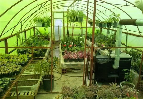 با ساخت گلخانه در حیاط آغاز کردم