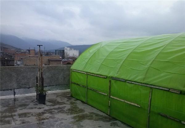 راه اندازی گلخانه در پشت بام و رسیدن به موفقیت و ثروت