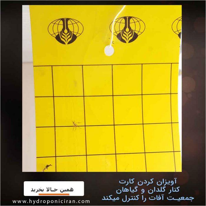 کارت-چسبناک-حشرات-و-آفات-کنترل-جمعیت-زرد