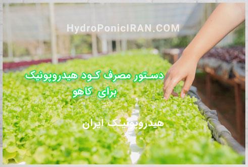 دستور مصرف کود هیدروپونیک ایران برای کاهو