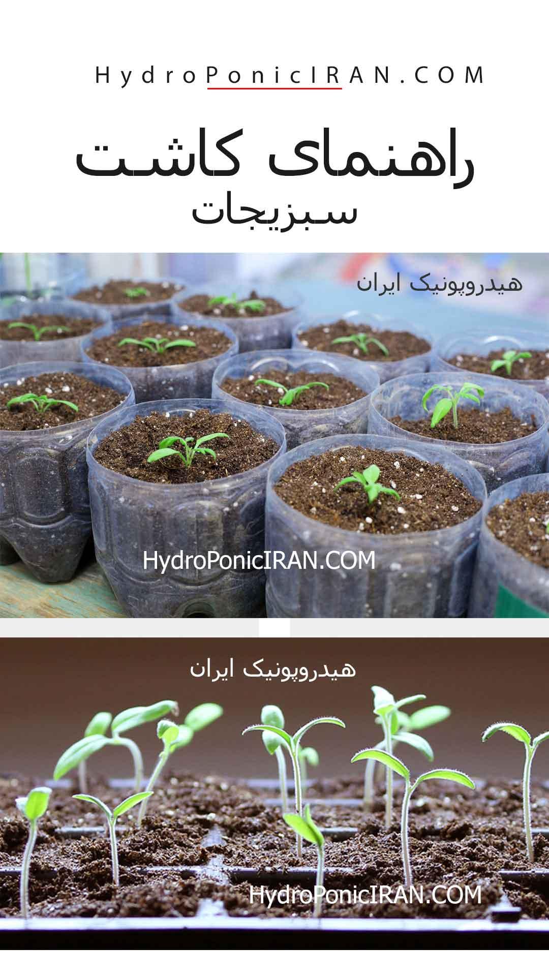 راهنمای کاشت سبزیجات در خانه توسط هیدروپونیک ایران