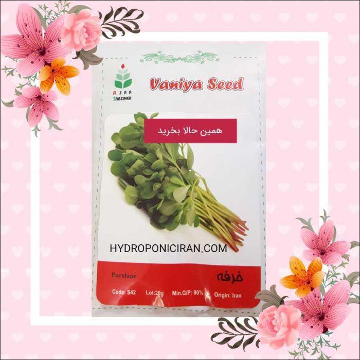فروش بذر خرفه در فروشگاه هیدروپونیک ایران