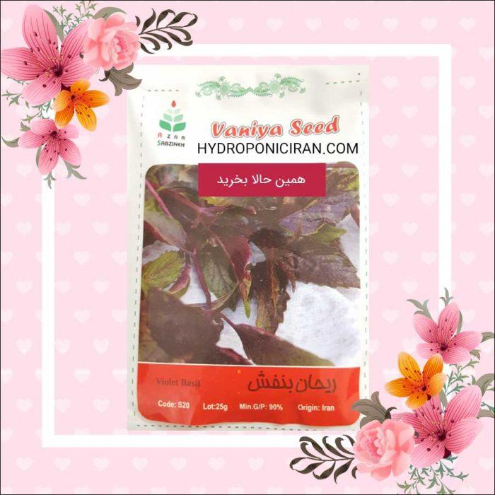 فروش بذر ریحان بنفش در فروشگاه هیدروپونیک ایران