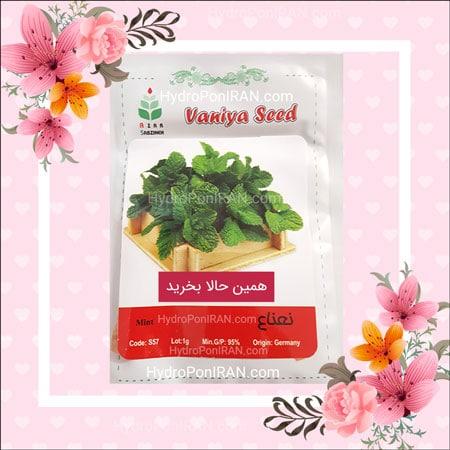 فروش بذر نعناع در فروشگاه هیدروپونیک ایران