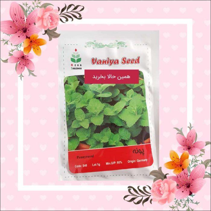فروش بذر پونه در فروشگاه هیدروپونیک ایران