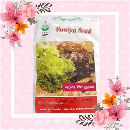 فروش بذر کاهو رنگین کمان در فروشگاه هیدروپونیک ایران