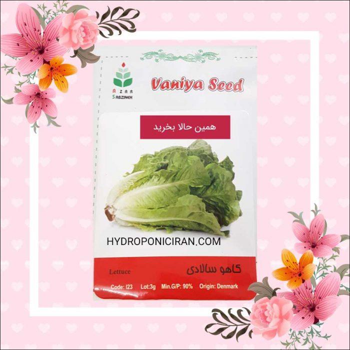 فروش بذر کاهو سالادی در فروشگاه هیدروپونیک ایران