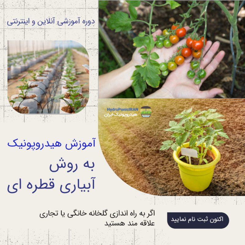 آموزش هیدروپونیک به روش آبیاری قطره ای تولید محصولات گیاهی در خانه و گلخانه