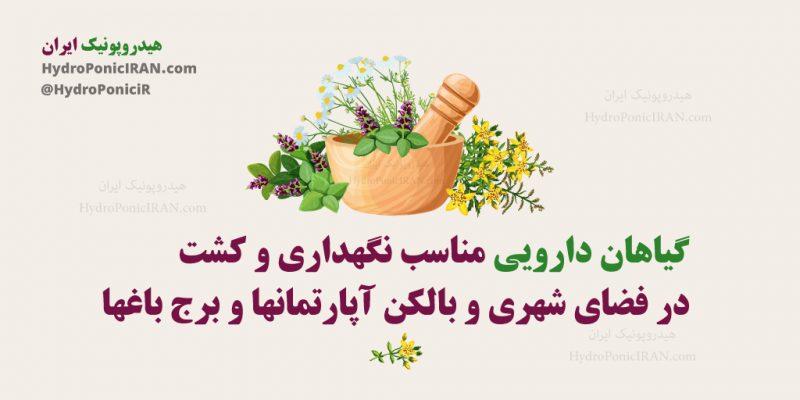 گیاهان-دارویی-مناسب-نگهداریو-کشت-در-فضای-شهری-و-بالکن-اپارتمانها-و-برج-باغها